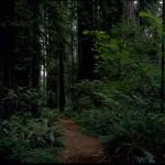 1200px-Redwood_National_Park_REDW9358